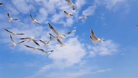 Een groep zeemeeuwen vliegt tegen de wind, hemel op de achtergrond stock videobeelden