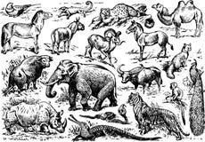 Een groot aantal dieren van wild Afrika stelde in het algemeen illustratie voor vector illustratie