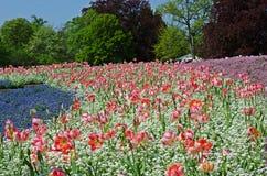 Een groot bloembed in het Park Stock Foto