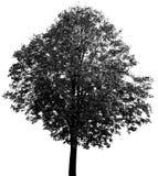 Een groot boomsilhouet stock illustratie