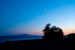 Een groot Bush-Silhouet onder de Maan Royalty-vrije Stock Foto's