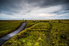 Een Groot Gebied van Groene Lange Grassen met een het Lopen Sleeplooppas door het naar het Oceaanzandstrand onder de Donkere Wolk Stock Fotografie