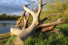 Een groot stuk die van hout door de rivier liggen Royalty-vrije Stock Afbeelding