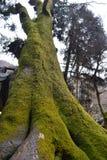 Een grote boom Royalty-vrije Stock Fotografie