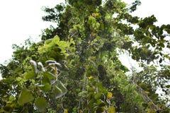 Een grote boom Royalty-vrije Stock Afbeeldingen