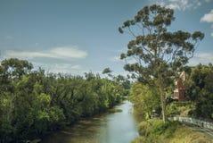 Een grote boom bevindt zich naast de Yarra-Rivier in de middag van Melbourne stock afbeeldingen