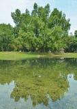 Een grote boom in de tuin Royalty-vrije Stock Afbeelding