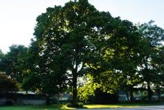 Een grote boom in de werf royalty-vrije stock afbeeldingen