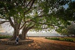 Een grote boom en een vrouw zitten onder om één of andere schaduw te krijgen stock afbeelding