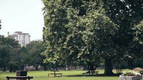 Een grote boom in het midden van een park stock video