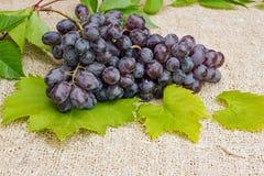 een grote bos van rijpe blauwe druiven Stock Foto's