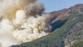 Een grote brand verslindt hectaren van bos tijdens een door de mensen veroorzaakte natuurramp royalty-vrije stock afbeeldingen