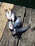 Een grote dag die voor forel vissen Royalty-vrije Stock Fotografie