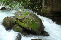 Een grote die rots met korstmos in een rivier wordt behandeld royalty-vrije stock foto's