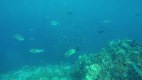 Een grote ertsader met vele verschillende vissen stock video