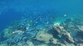 Een grote ertsader met zeer verschillende vissen stock footage