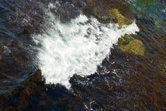 Een grote golf en de bruine algen Stock Afbeelding