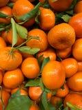 Een grote groep kleine sinaasappelen en groene wijnstokken Stock Fotografie