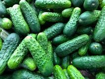 Een grote groep kleurrijke Groenten in het zuur Royalty-vrije Stock Foto's