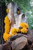 Een grote groep paddestoelenkip van het hout op een wilg Royalty-vrije Stock Afbeeldingen