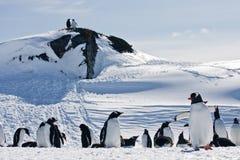 Een grote groep pinguïnen stock foto's
