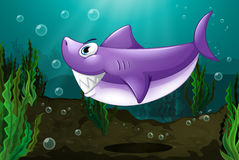 Een grote haai onder het overzees Royalty-vrije Stock Foto's
