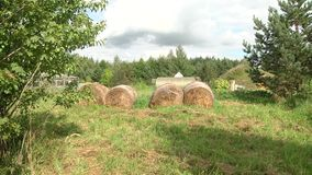 Een grote hooiberg van droog hooi op het tijdstip van het oogsten en omhoog gerold op een broodje ligt op het groene gras stock videobeelden