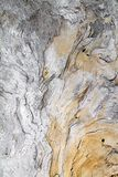 Een grote houten die boomstam van het overzees en van tijd wordt gesneden verbergt fantasierijke vormen in de textuur van zijn na stock foto's