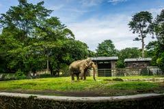 Een grote olifant in de kooi met pool het omringen door omheining en bomen en mooie hemel als binnen genomen foto als achtergrond royalty-vrije stock afbeeldingen