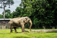 Een grote olifant in kooi het omringen door omheining en bomen en mooie hemel als foto als achtergrond die in Ragunan-dierentuin  stock foto