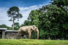 Een grote olifant in kooi het omringen door omheining en bomen en mooie hemel als foto als achtergrond die in Ragunan-dierentuin  stock foto's