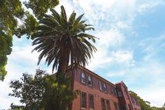 Een grote palm naast een herenhuis Royalty-vrije Stock Fotografie