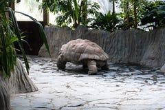 Een grote schildpad die zich langzaam bewegen royalty-vrije stock afbeeldingen