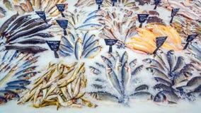 Een grote selectie die van verse vissen in het ijs op de teller van de supermarkt liggen royalty-vrije stock foto's