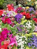Een grote selectie van de lente bloeit diverse types en kleuren stock afbeeldingen
