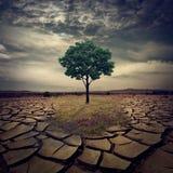 Een grote spectaculaire eenzame eiken boom op een heuvel die geschroeid is. Royalty-vrije Stock Foto