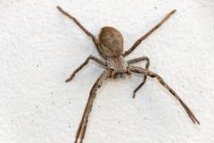 Een grote spin royalty-vrije stock foto's
