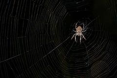 Een grote spin zit op zijn spinneweb royalty-vrije stock afbeelding