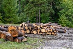 Een grote stapel van hout in een bosweg Stock Fotografie