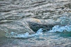 Een grote steen op de kust die van die rivier krijgen door de watergolf wordt geraakt stock afbeeldingen