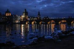 Een grote troep van zwanen die bij nacht in de Vltava-Rivier zwemmen royalty-vrije stock fotografie