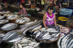Een grote vis in MYANMAR - BIRMA stock fotografie