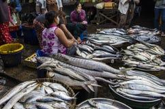 Een grote vis in MYANMAR - BIRMA Royalty-vrije Stock Afbeeldingen