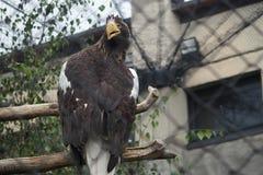 Een grote Vogel met een gele bek stock afbeeldingen