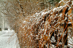 Een haag in de sneeuw Royalty-vrije Stock Foto