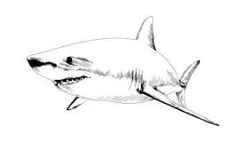 Een haai in inkt op een witte achtergrond wordt getrokken die Royalty-vrije Stock Foto