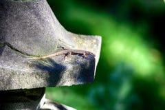 Een hagedis met een lange staart Royalty-vrije Stock Foto's