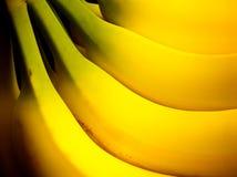 Een hand van bananen Royalty-vrije Stock Foto