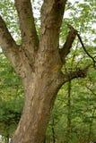 Een handige boom stock fotografie