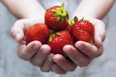 Een handvol verse aardbeien Royalty-vrije Stock Foto
